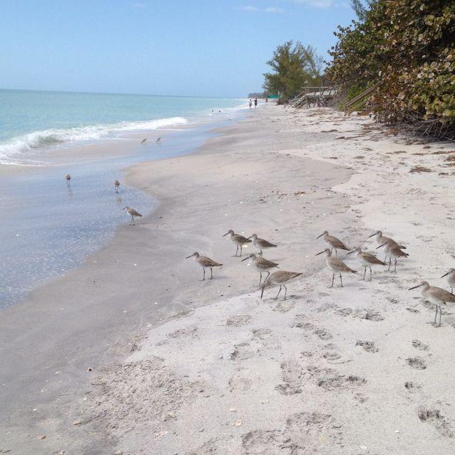 Manasota Key Beach ~ SWFL | Florida vacation, Beach, Beach ...