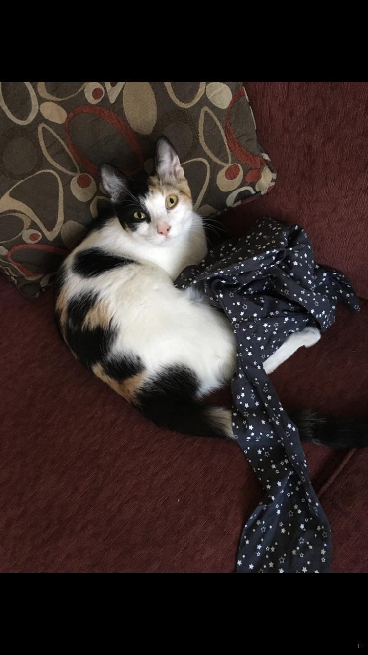 Lost Cat Female Hamilton On Canada L9a 3s6 Lost Cat Cats Indoor Cat