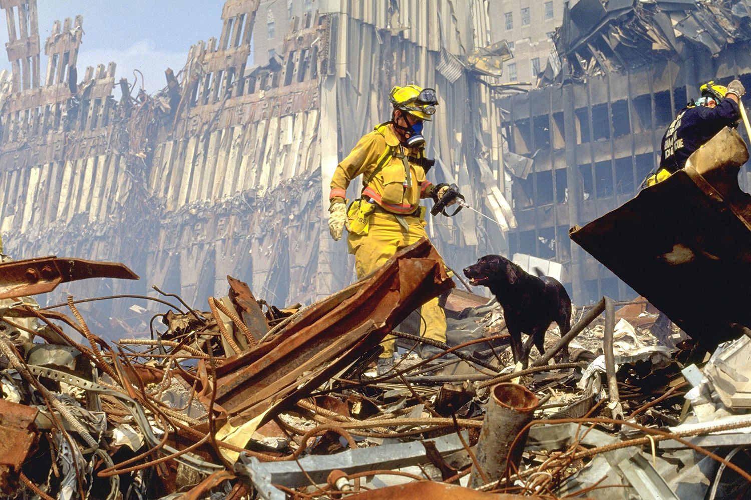 9/11 'hero dog' saved woman trapped in rubble for 27 hours (Photo: Animal Planet)