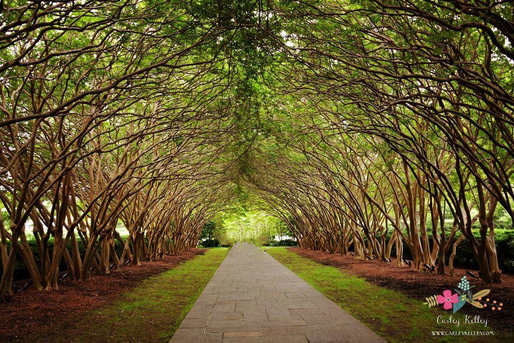 27d20e024d87a96cca3d1b37c0d8121b - Dallas Arboretum Botanical Gardens Dallas Tx