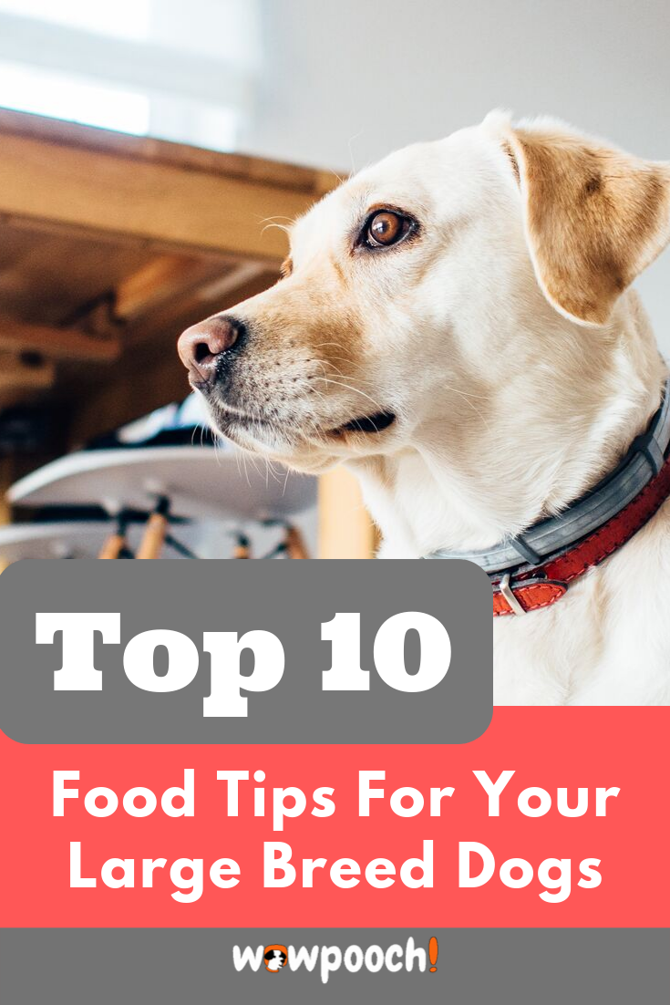 Best Dog Food For Large Breeds Puppies Adults Dry Canned Best Dog Food Senior Dog Large Breed Dog Food