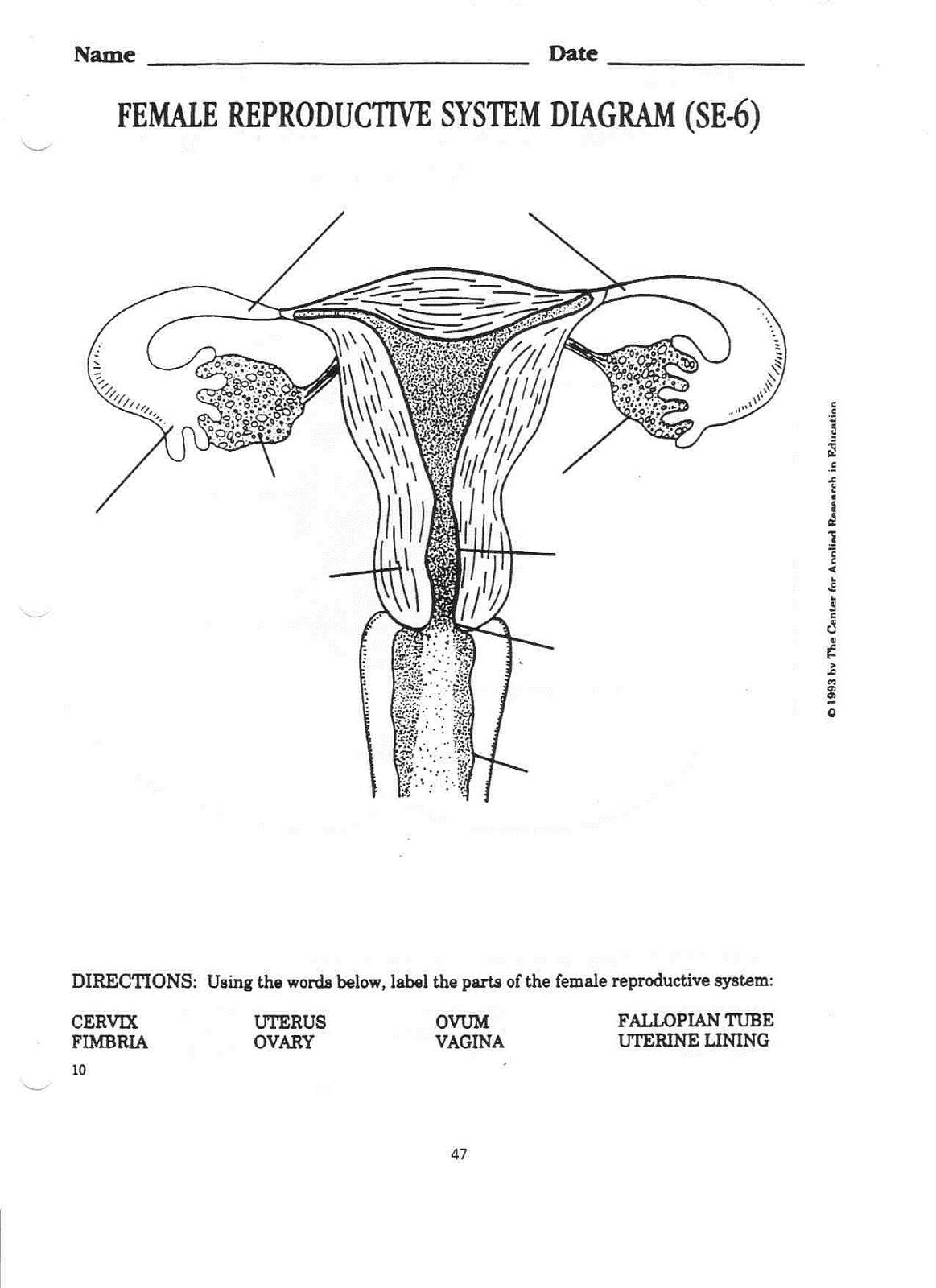 Image Result For Free Printable Worksheet Reproductive Anatomy