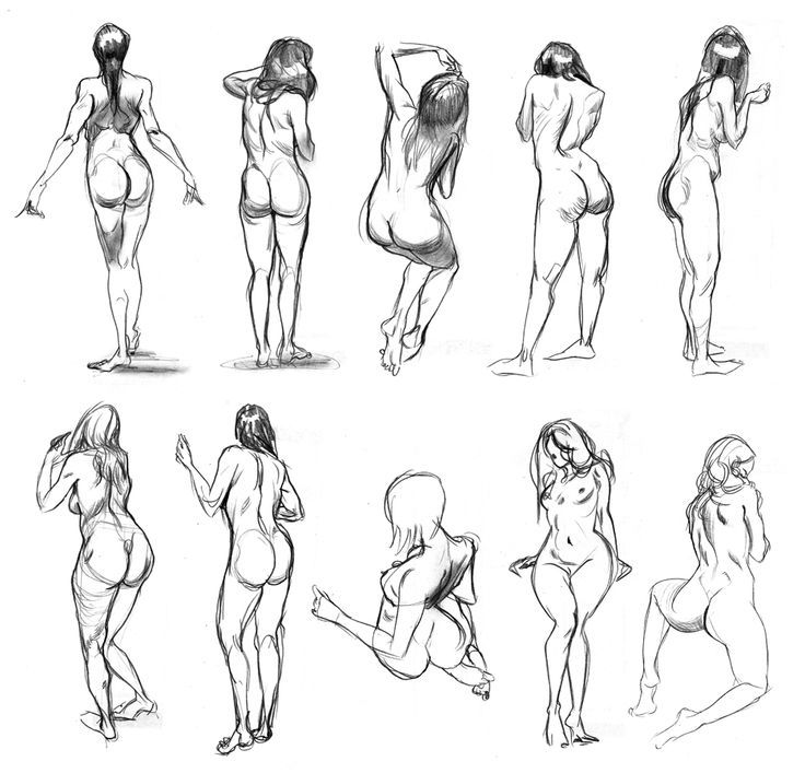 Pin by Krevet on female anatomy   Pinterest   Human drawing, Drawing ...