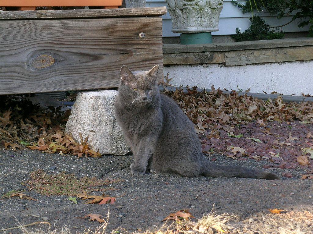 Mugsy, the 19 yr. old Wonder Cat.