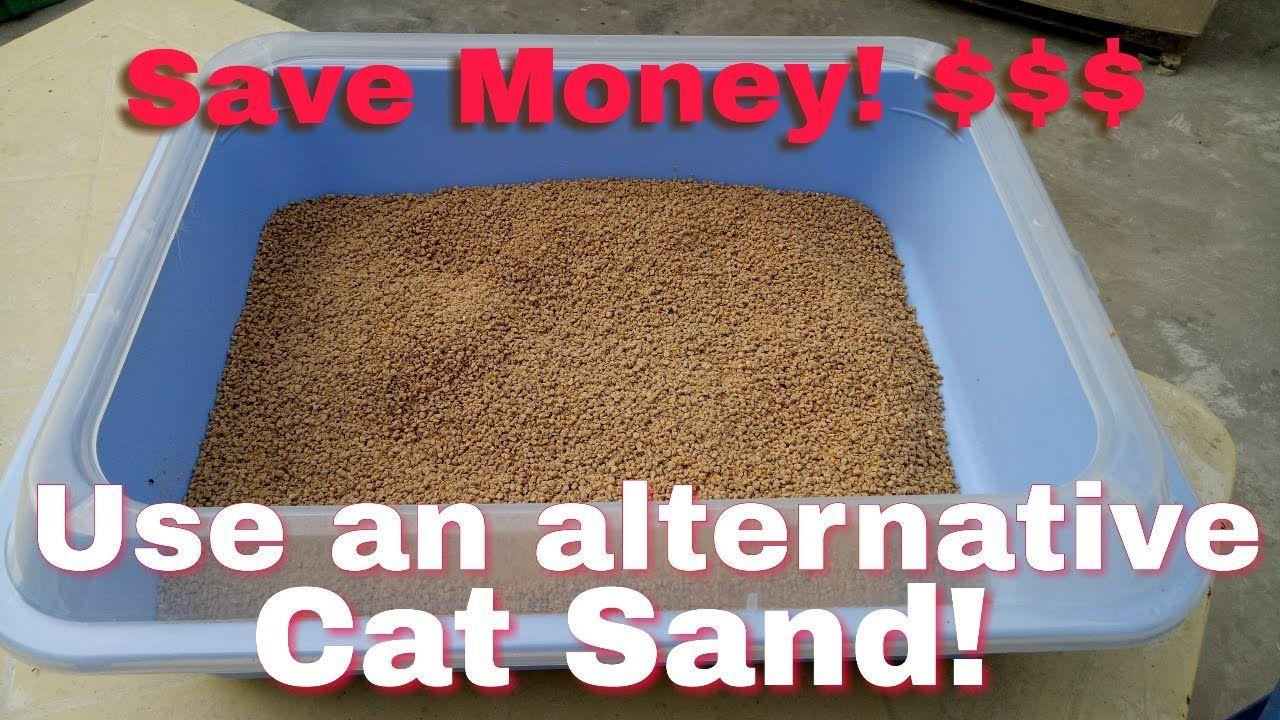 Cheap Cat Sand An Alternative Litter Sand For Your Cats Cat Litter Cats Litter