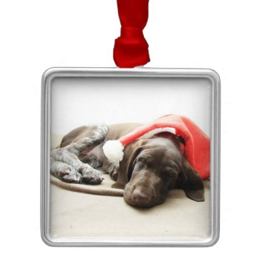 Dreaming of Santa - German Shorthair Puppy Christmas Tree Ornament