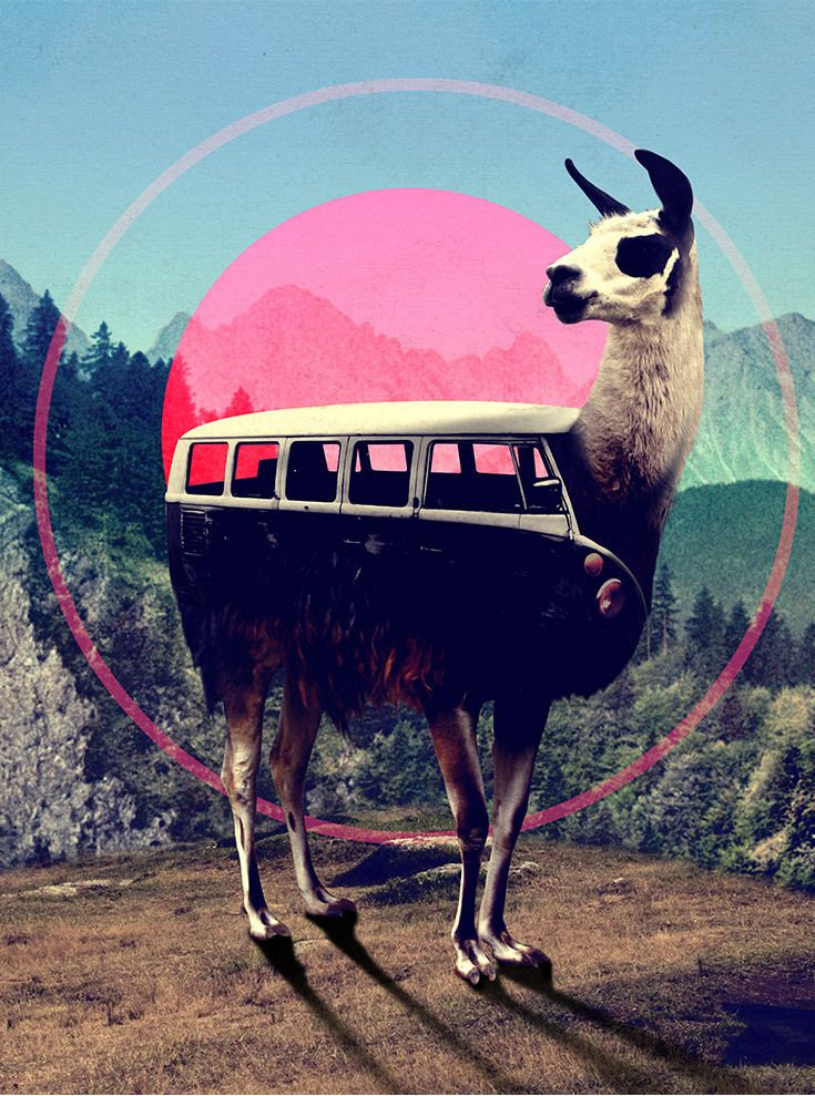 LLama Van by Ali Gulec is available on all sorts of home decor products like art prints, framed wall art, bedding, pillows, and more--all available at DENY Designs.