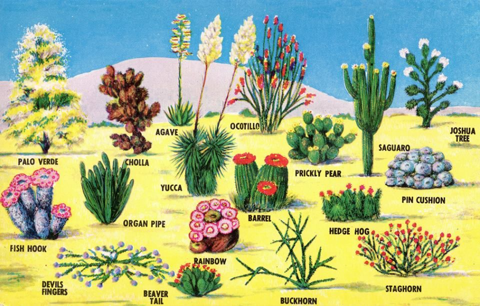 Desert Plants Named