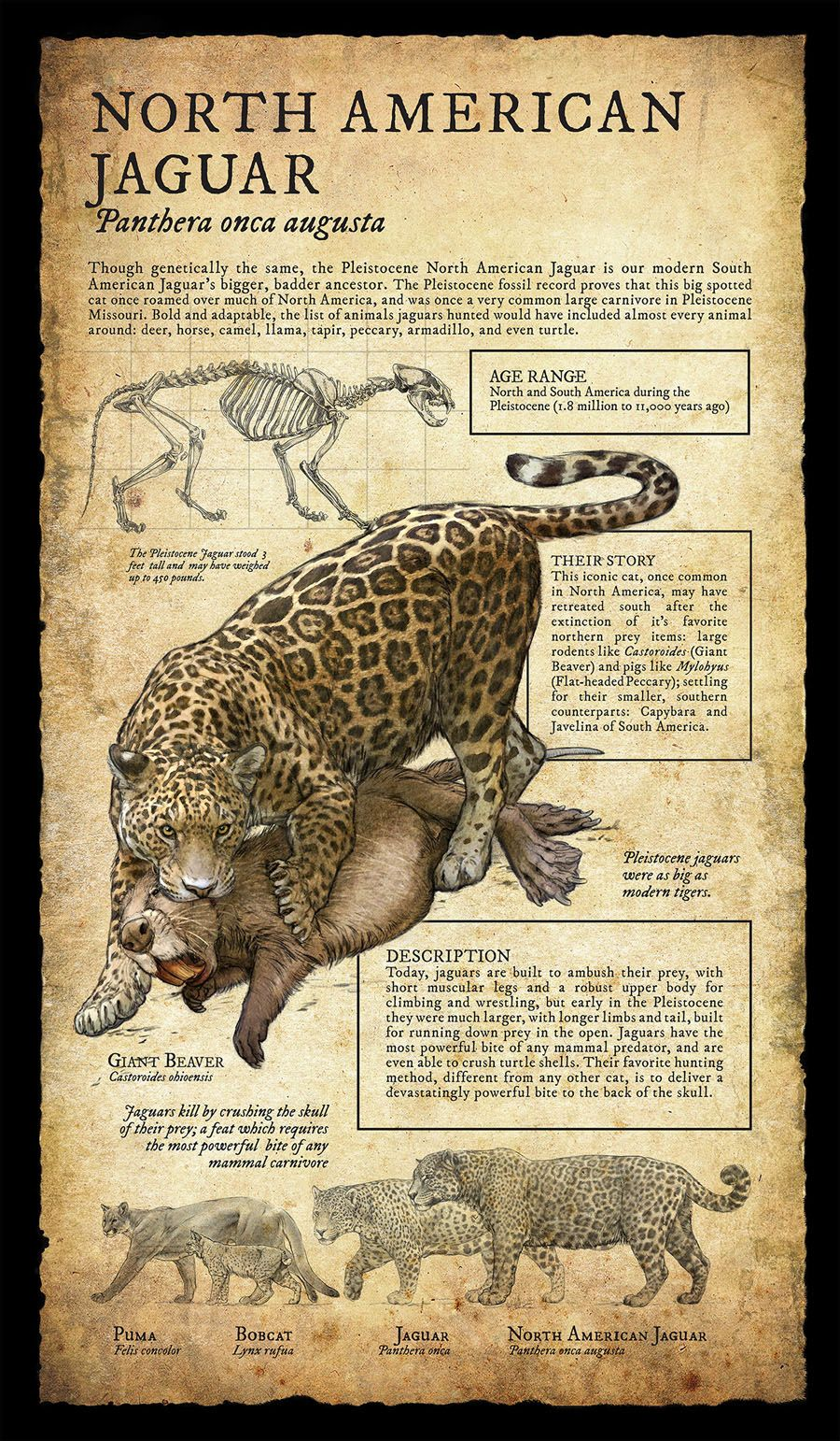 Natural History Museum Signage by Beth Zaiken   Jungle Tales ...