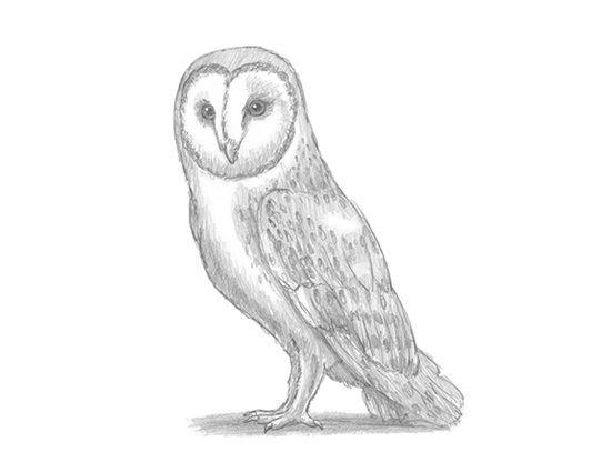 Welcome | Easy animal drawings, Realistic animal drawings ...