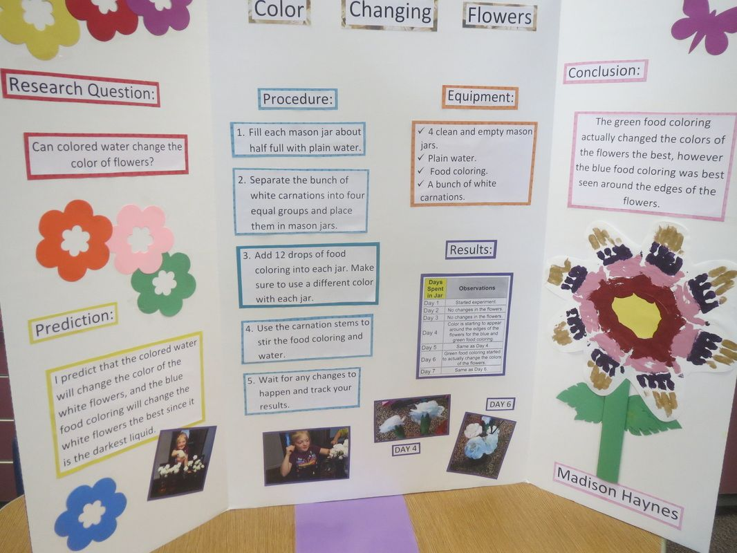 Image result for science fair projects color changing flowers ...