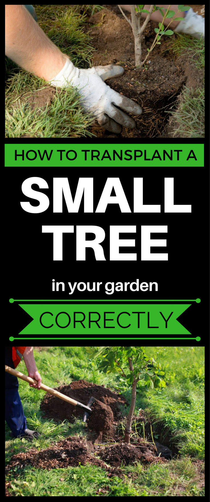 How To Transplant A Small Tree In Your
