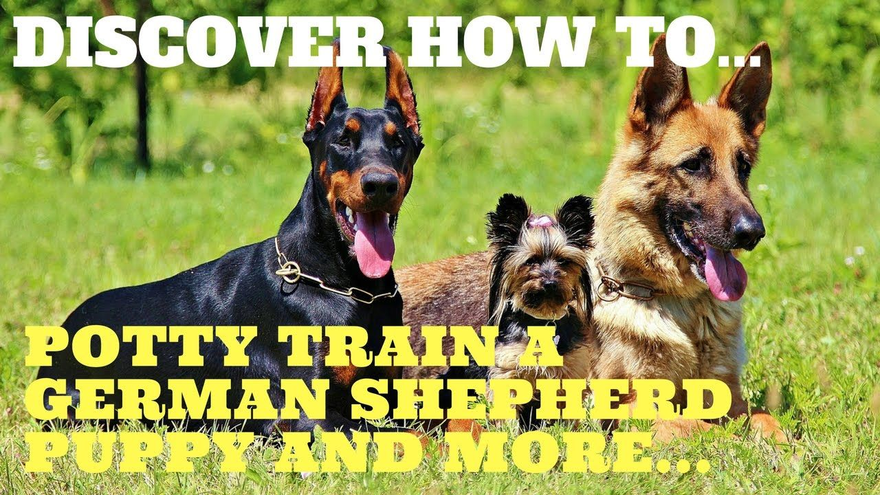Long Potty Train German Shepherd Puppy Tips Free Mini Course