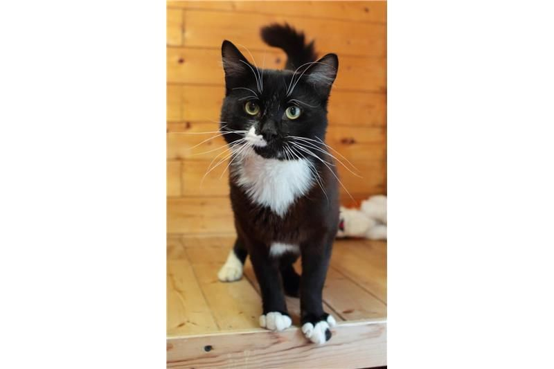 Find a cat near you Adopt a cat Cats Protection Cat