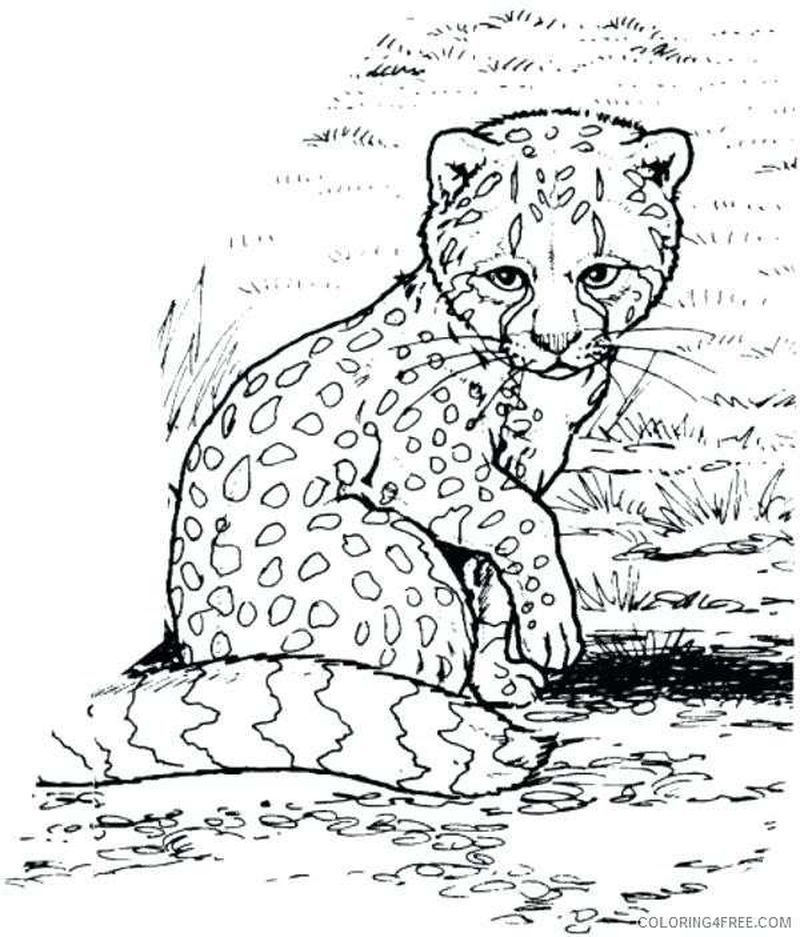 Collection Of Cheetah Coloring Pages Ideas Zoo Animal Coloring Pages Animal Coloring Pages Baby Coloring Pages