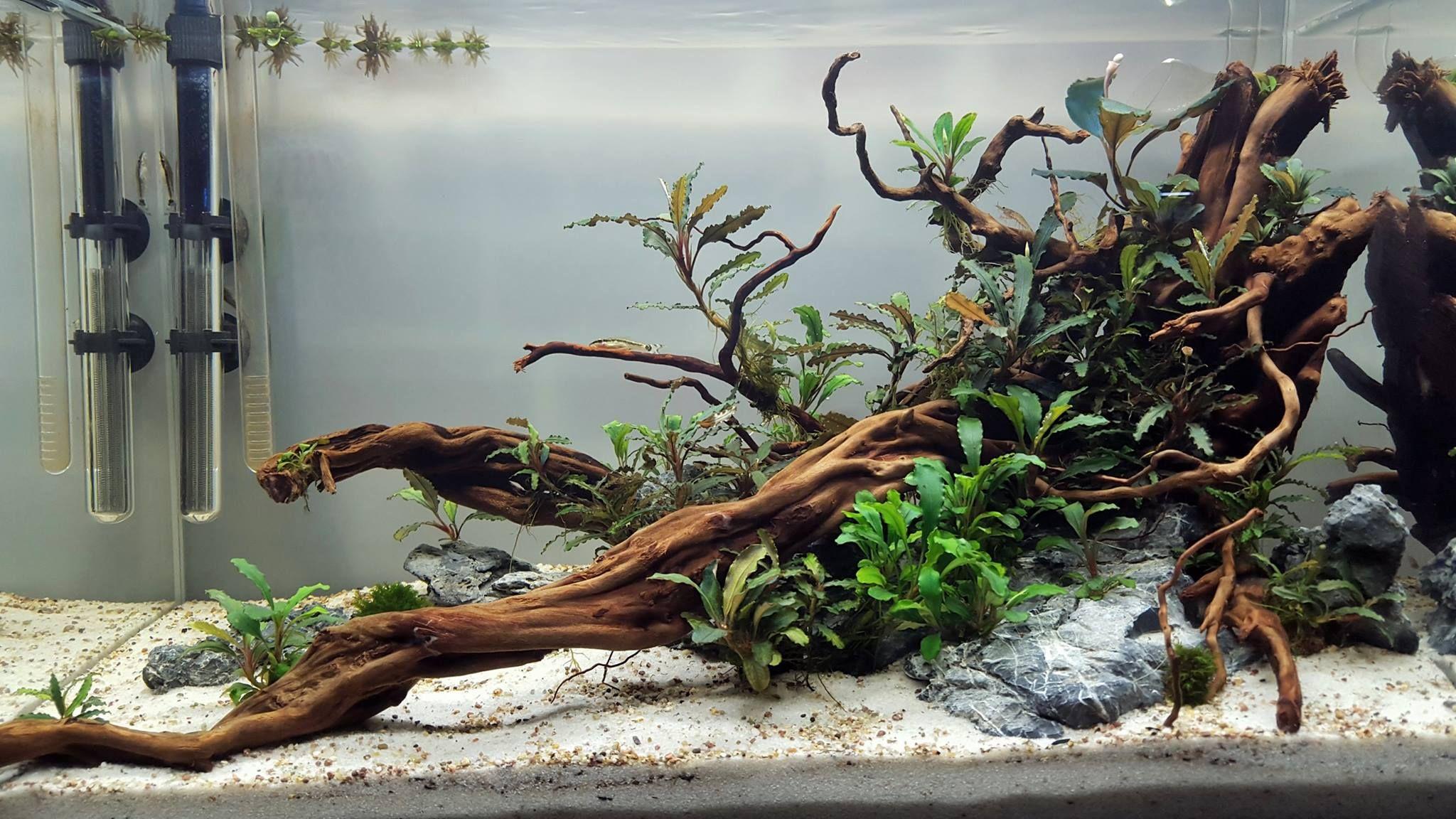 Nowa aranżacja zbiornik 60x30x36 6mm Optiwhite Aqua Nature