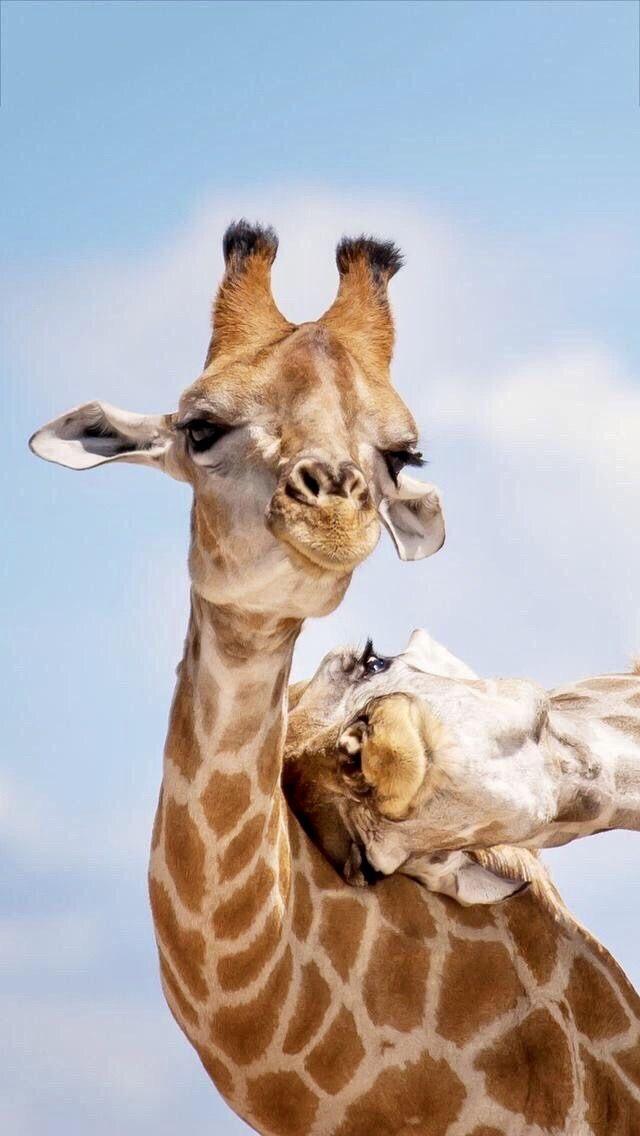 gillar ni ocks giraffer skriv i kommentarerna in 2020