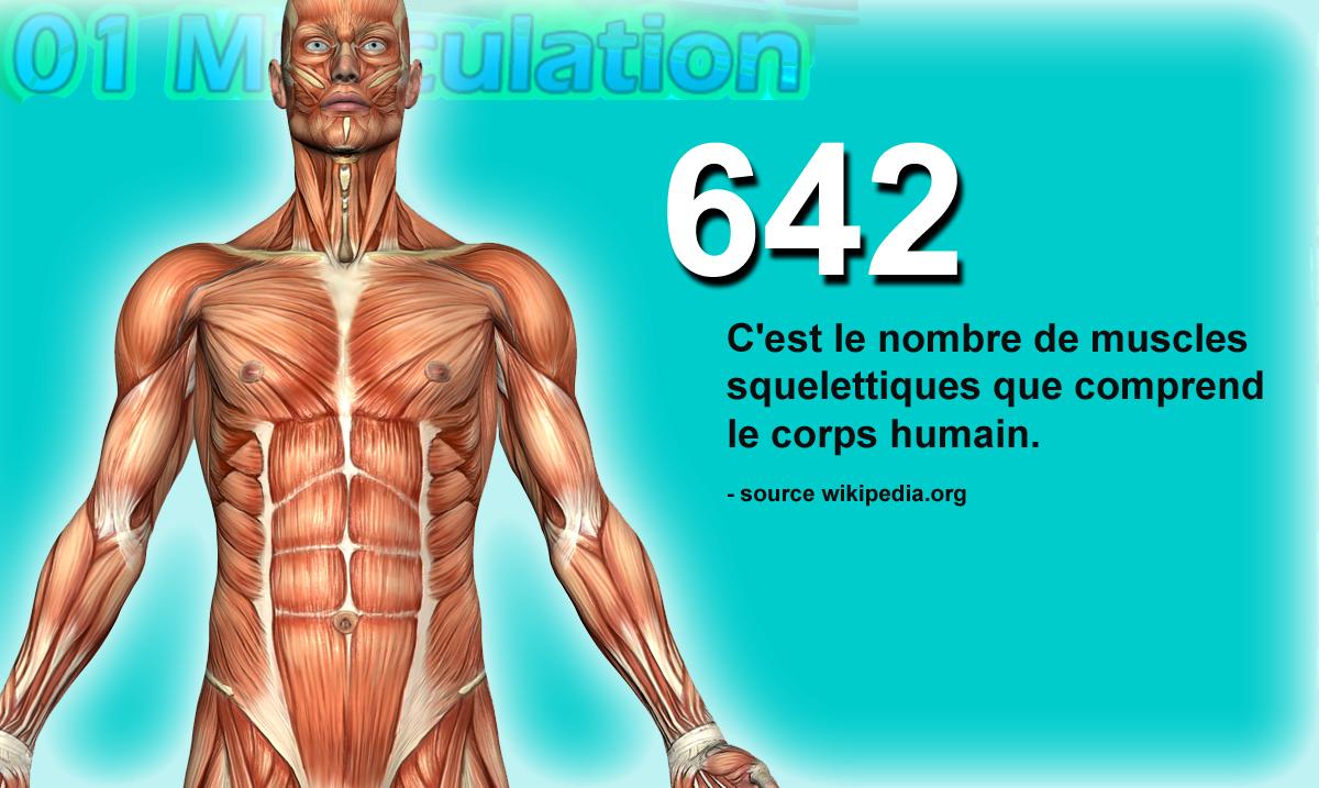 combien de muscles dans le corps