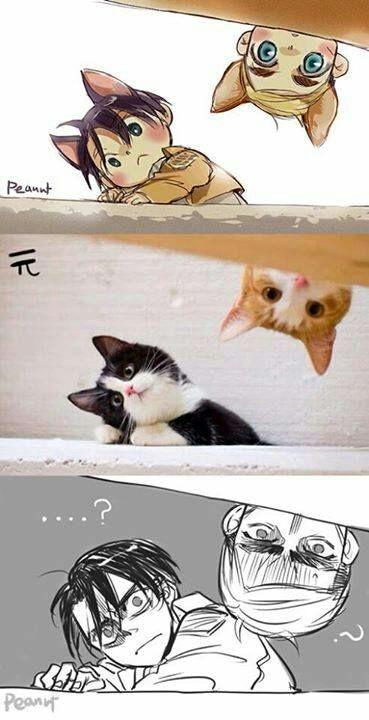 Erwin X Levi Pics - Nekos Vs. Cats Vs. Real Life