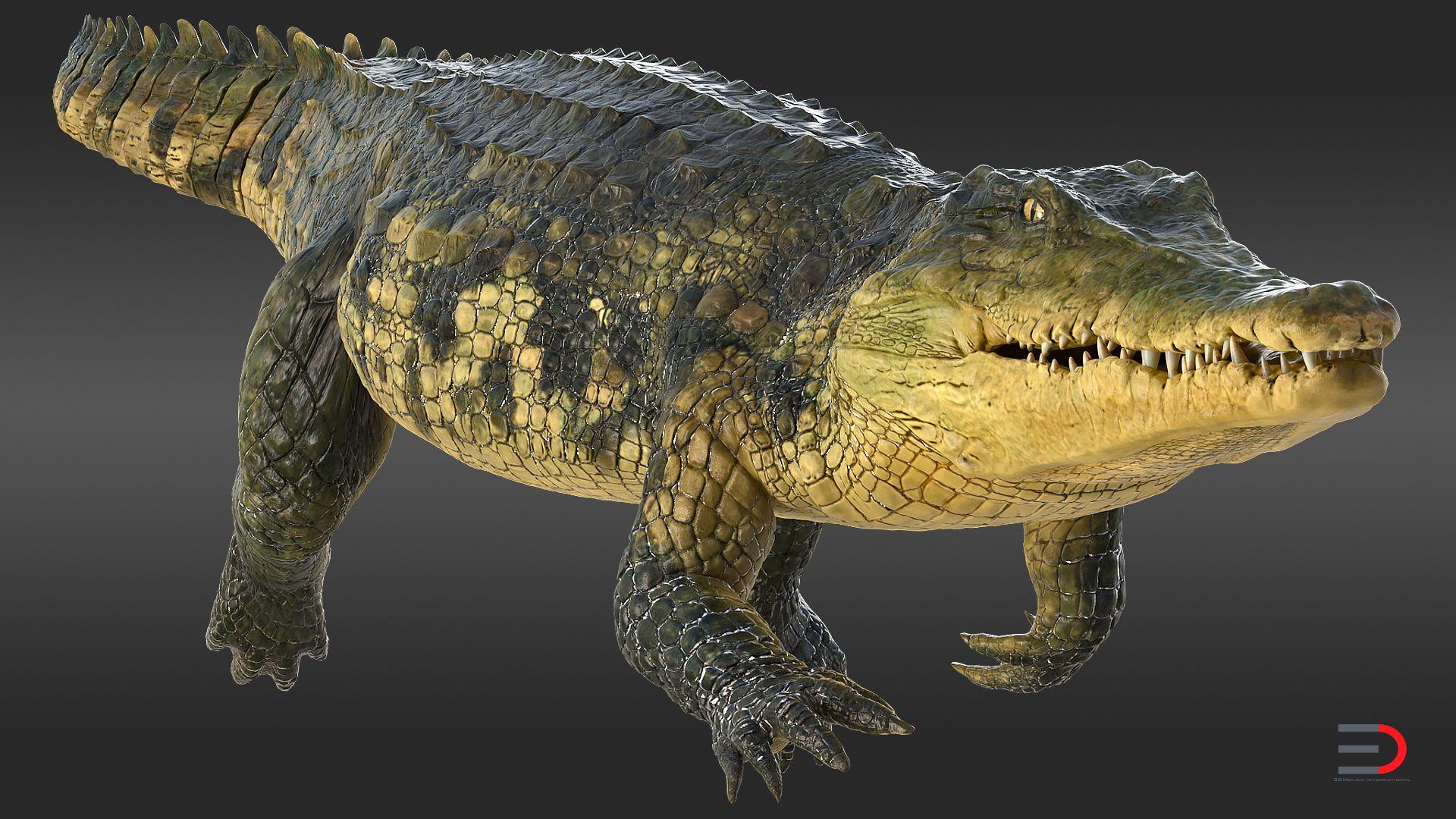 39++ Animated crocodiles info