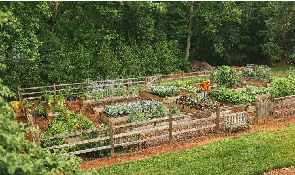 Talking With Our Tribe Joe Lamp L Of Growing A Greener World Garden Tribe Vege Garden Ideas Vegetable Garden Planning Backyard Vegetable Gardens