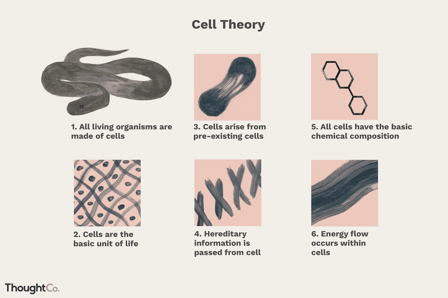 Cell Theory A Core Principle Of Biology Cell Theory Cell Passive Transport