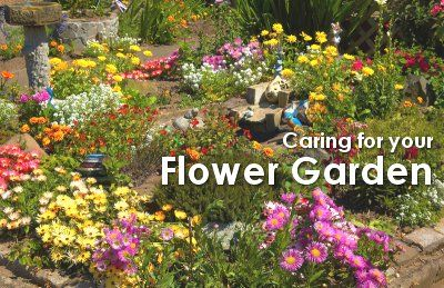 Caring for Your Flower Garden | How Does Your Garden Grow ... on flower wallpaper, flower fences, flower arrangements, backyard designs, kitchen designs, flower background, flower arch, landscape designs, flower coloring pages, flower gardens for small yards, flower gardening, flower gardens with fountains, vintage wallpaper designs, flower gardens for florida, flower display, flower beds, swimming pool designs, patio designs, yard designs, flower desktop,