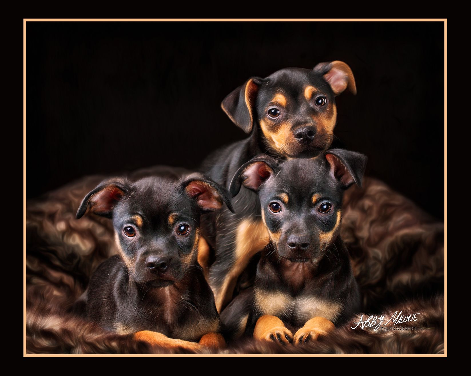 Can You Believe These Are Shelter Dogs Love Them C Pawsonality Pet Photography Little Rock Ar Pet Photographer Dog Photograph Hyper Dog Pet Photographer