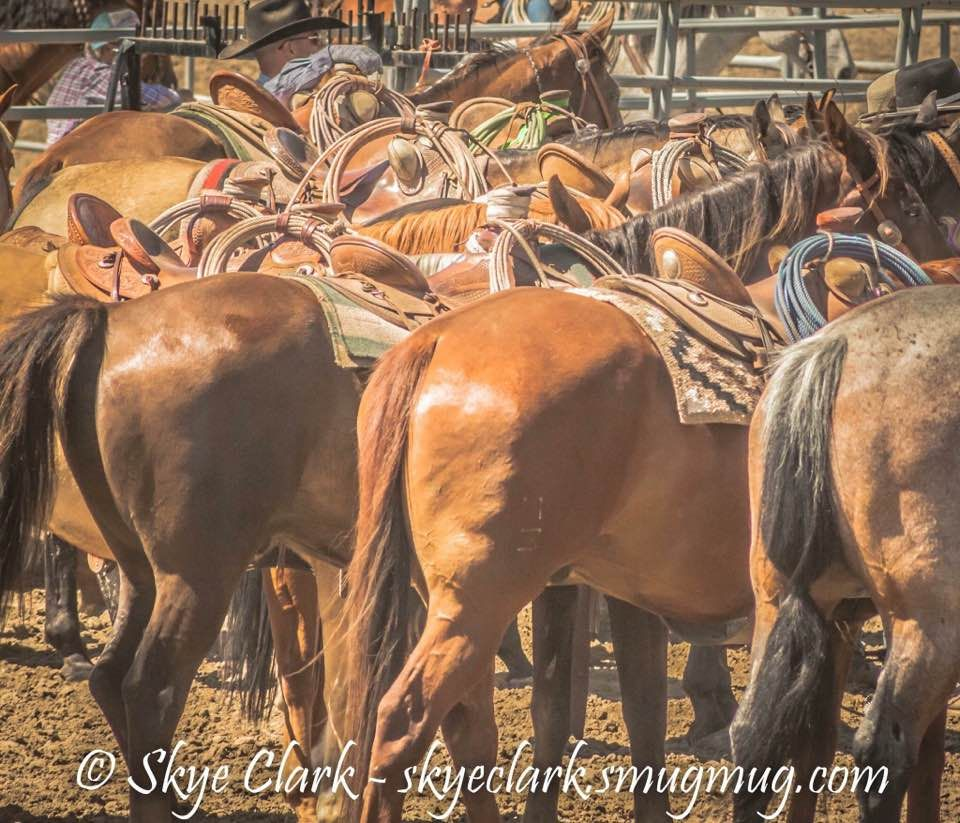 horse saddle office chair owl bean bag skye clark photo of a ranch rodeo chairs for cowboys horses saddles
