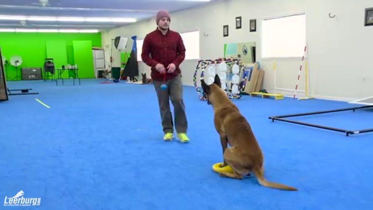 Unique Co Directed Dog Training Online Dog Training Methods