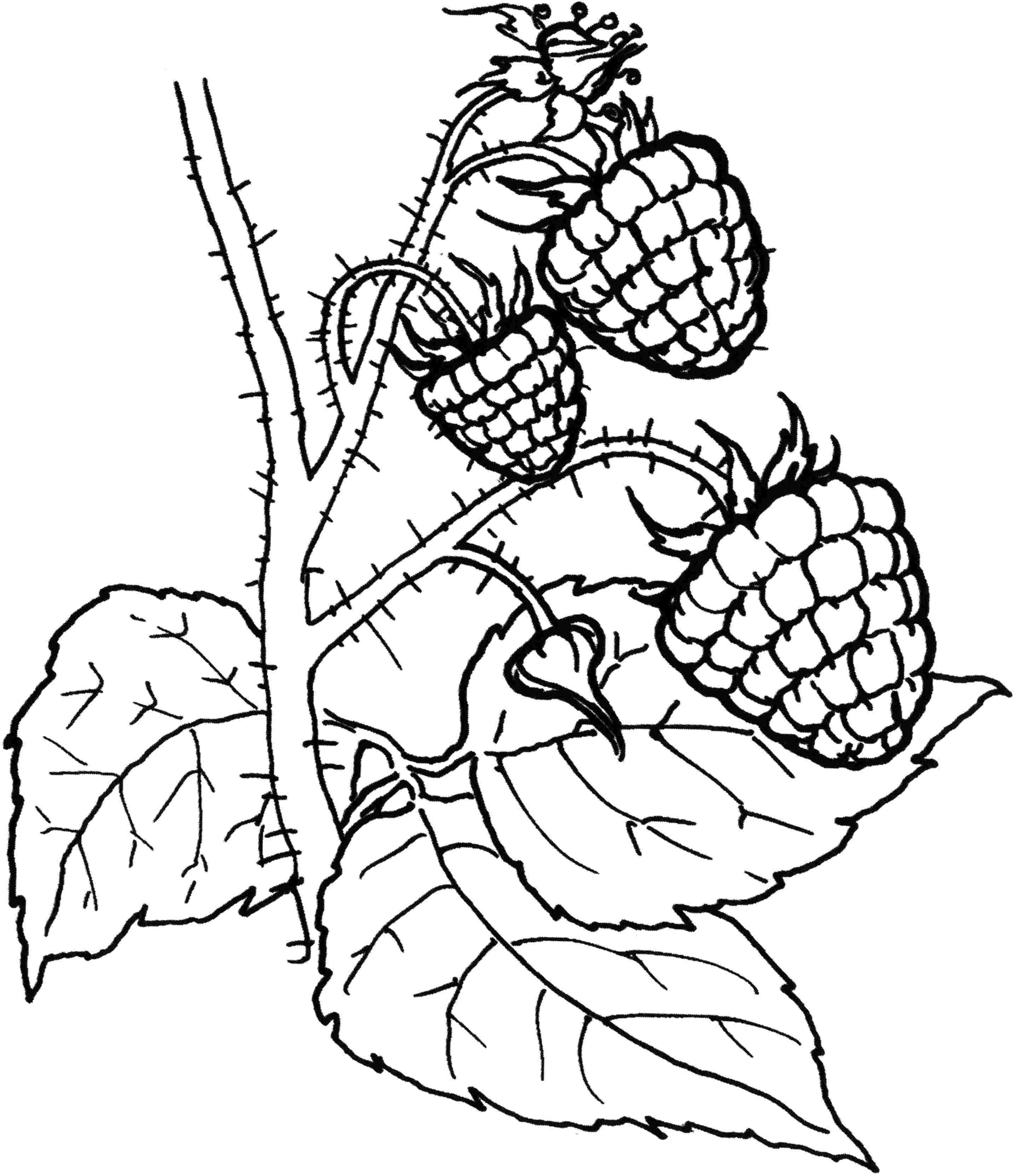 Bramen Fruit Coloring Pages Coloring Pages Fall Art Projects