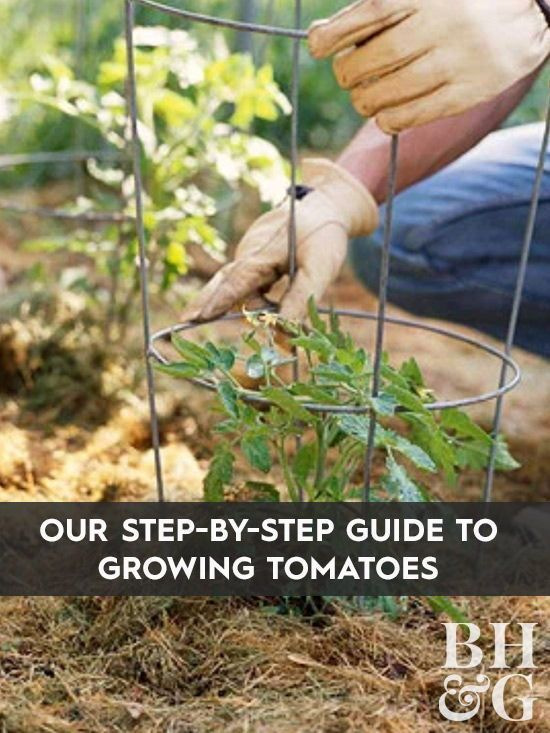 Tips to Grow the Best Tomatoes Possible Enjoy your best crop of tomatoes yet with these 10 tips to get your tomato plants off to a strong start.Enjoy your best crop of tomatoes yet with these 10 tips to get your tomato plants off to a strong start.