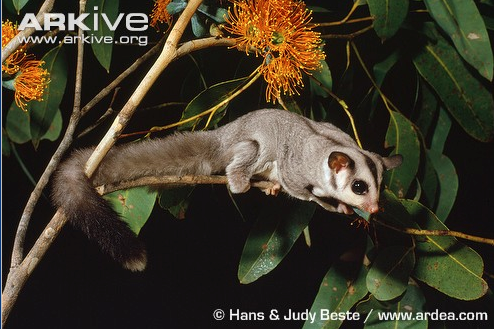 """In an instant, Babble, a sugar glider, appeared in the branches above them. He was quick, and small, the loose skin under his arms helped him to glide soundlessly from tree to tree. """"Yes, boss."""" He saluted sharply and stood at attention."""