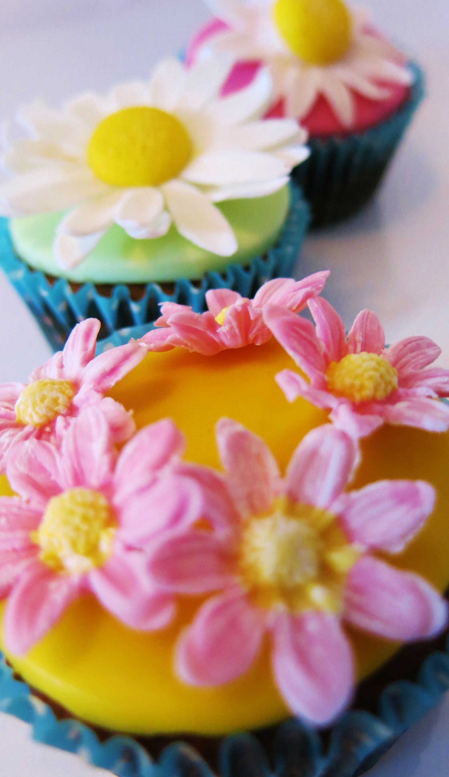 baking daisies summer 2014 cupcake collection #bakingdaisies #cupcakes