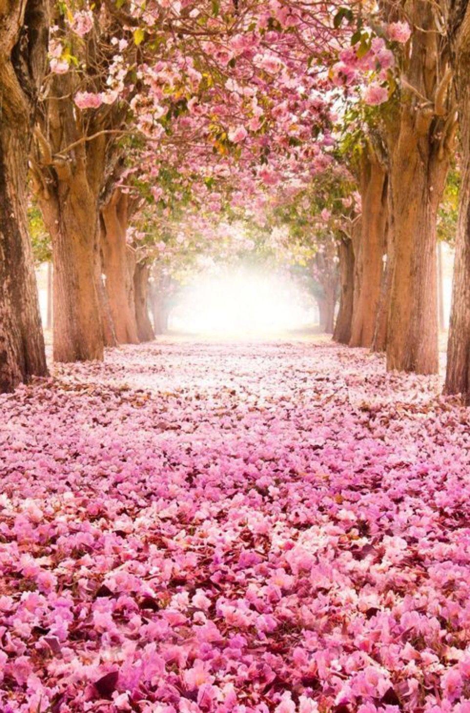 Romantik flower tunnel holy pinterest