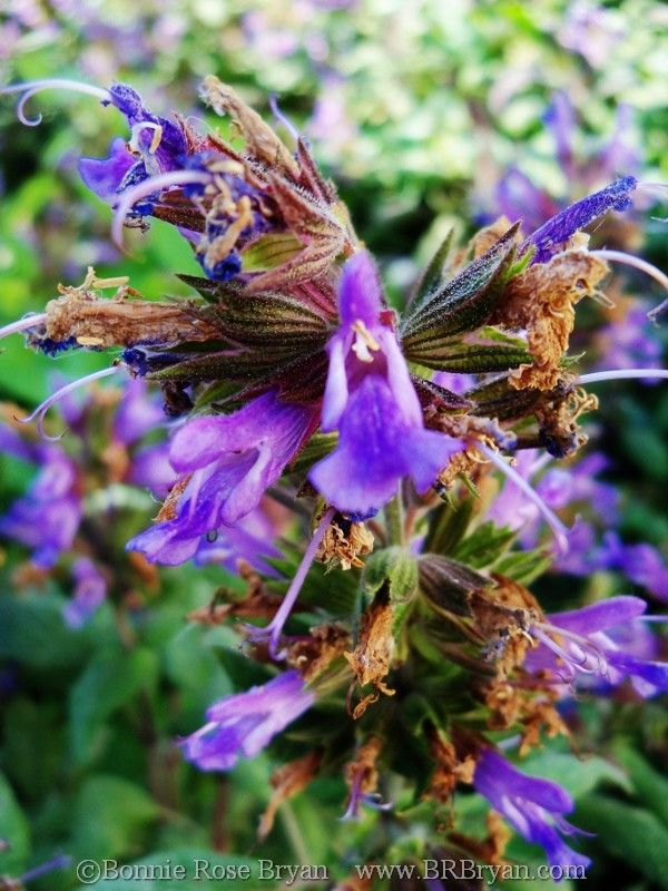 wild flowers, France  // photo by Bonnie Rose Bryan