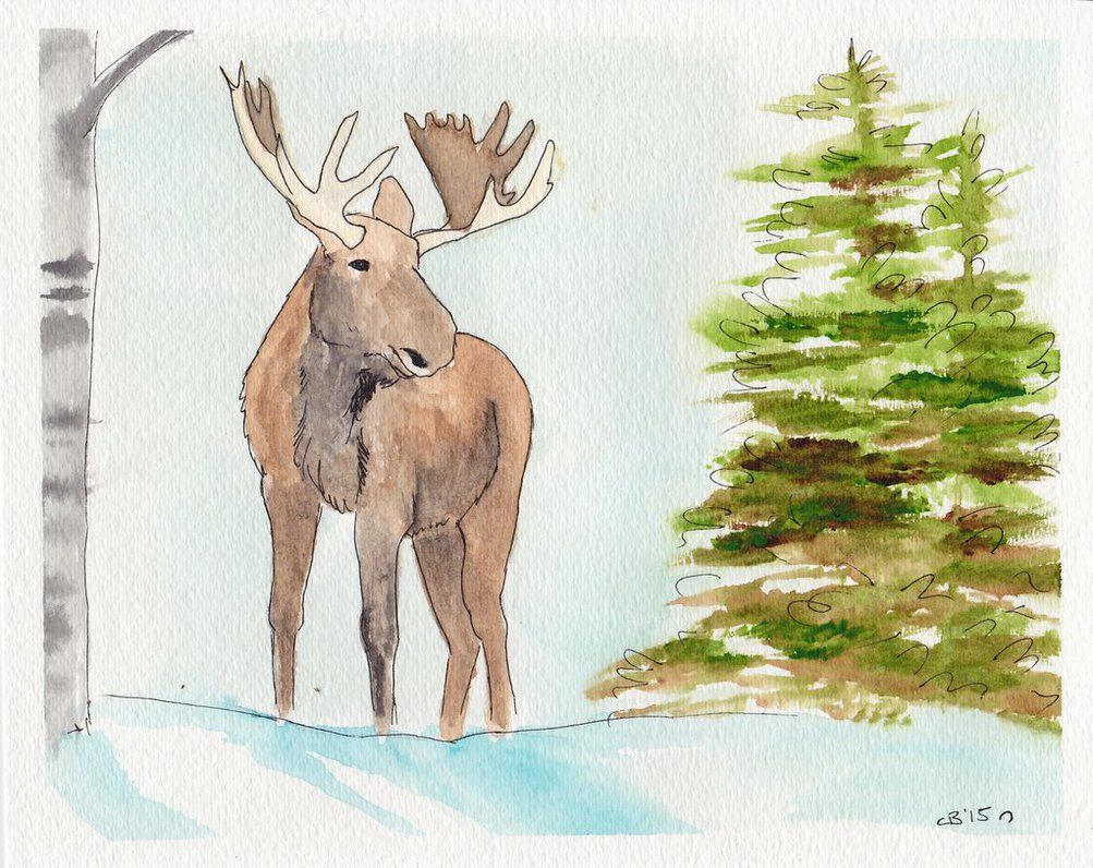Winter Moose by Icky Dog on Deviant Art 8X10, watercolor and ink