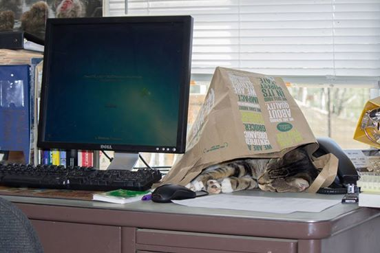 """Yesterday was """"Office Tabby Tuesday""""!  http://on.fb.me/1vNTPgO"""