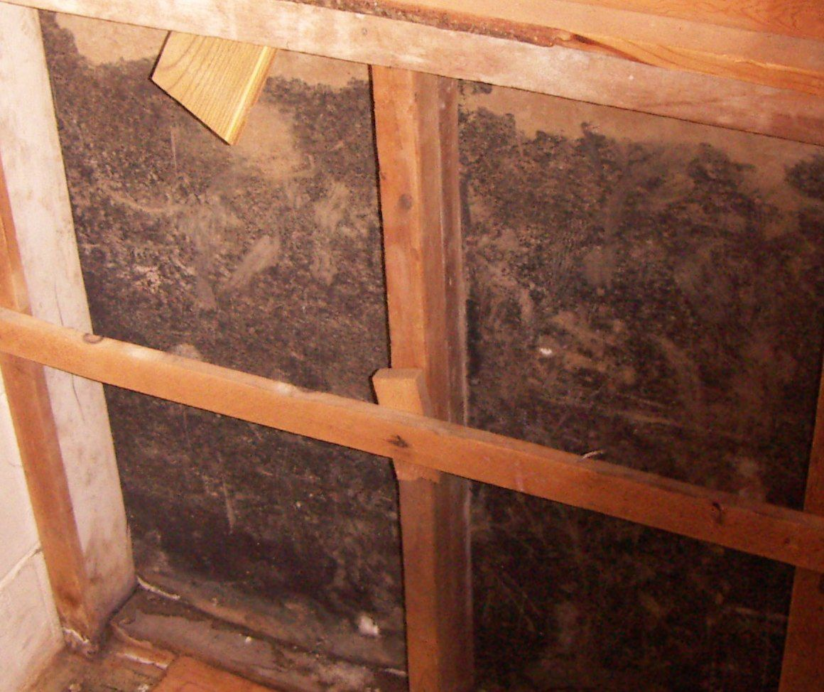 Mold Pro Inc Toxic Inspections And Testing On Long Island New York