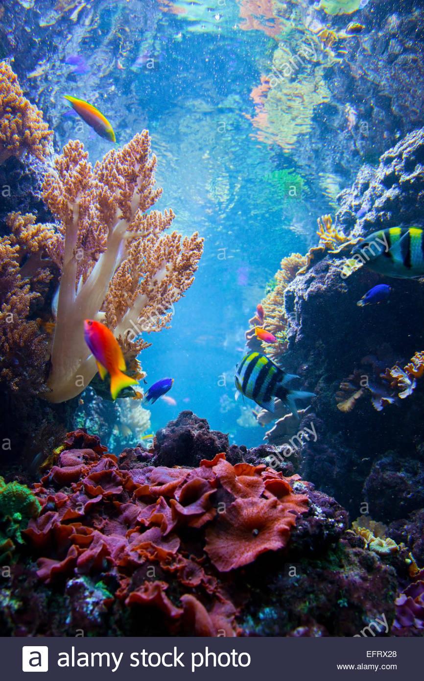 Fundo Do Mar Imagens Pesquisa Google Em 2020 Recife De Corais Animais Subaquaticos Fotografia Subaquatica