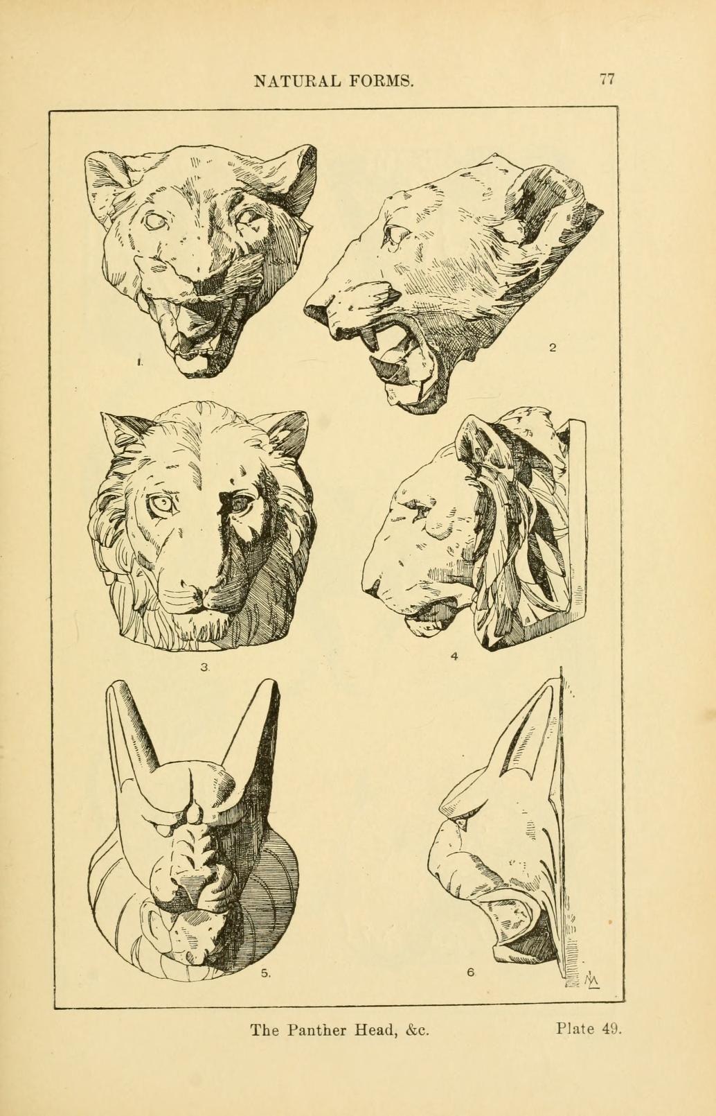 Handbook Of Ornament A Grammar Of Art Industr Eskizy Zhivotnyh Risunki Arhitekturnye Eskizy