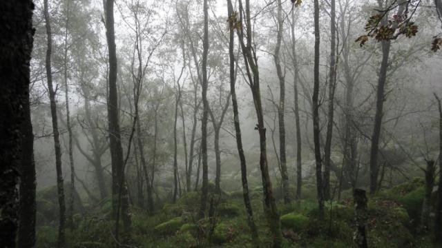 skog (høst)