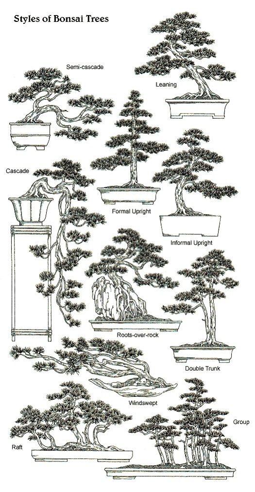 bonsai idea