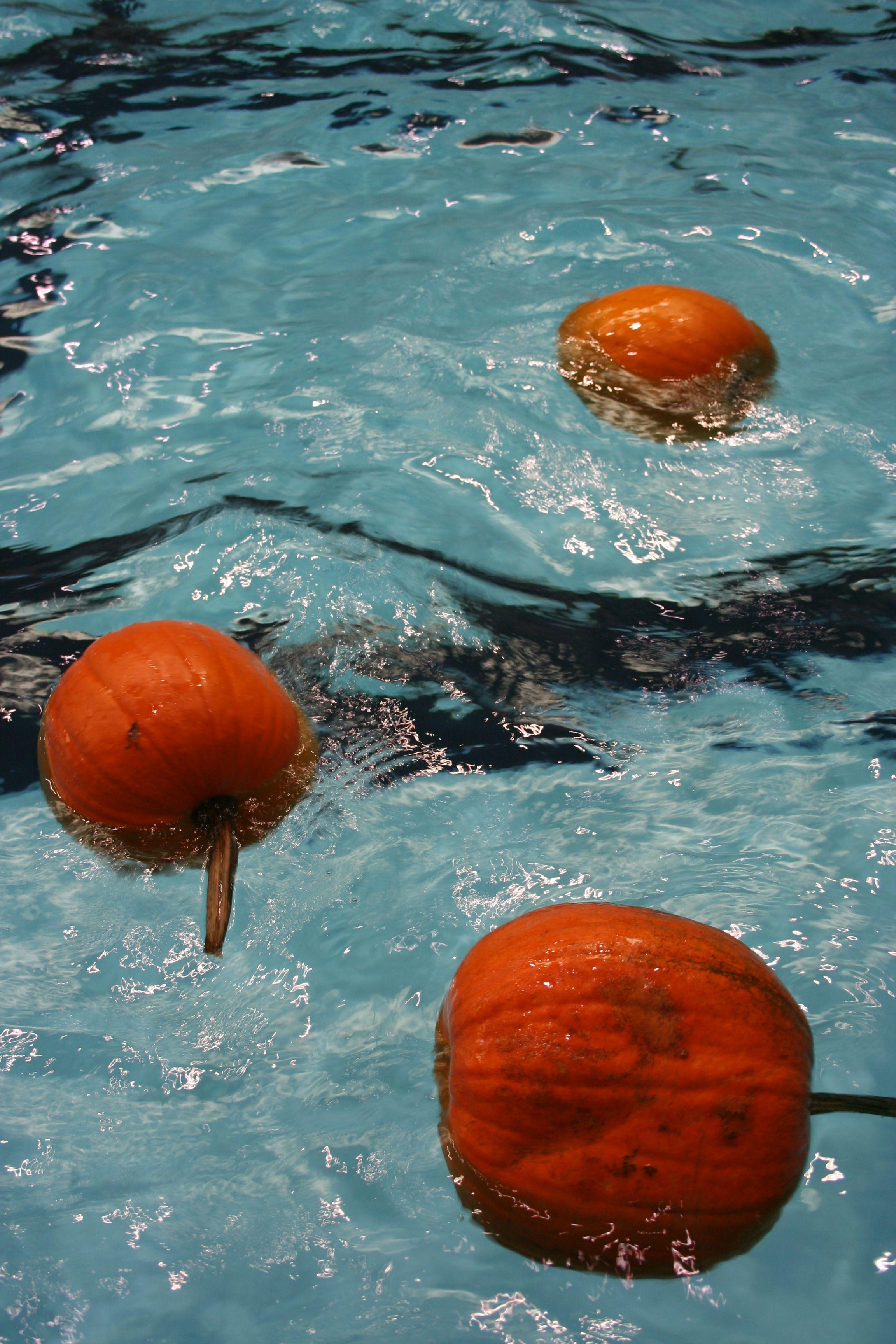 Pumpkin Patch in the Lakewood High School Pool Splash your