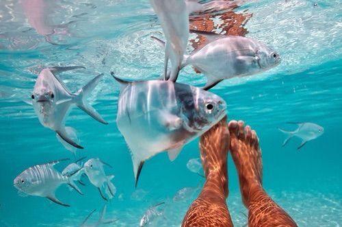 Awe I miss snorkeling in Aruba and Curaçao and Jamaica. So beautiful!