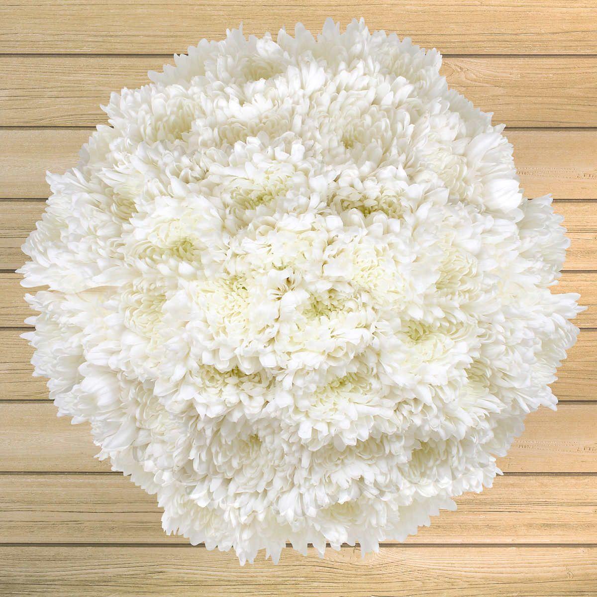 80stem Disbud Mums Costco flowers, Bulk roses, Flower
