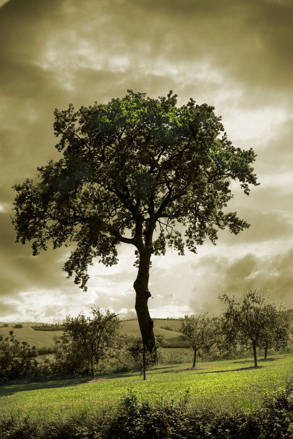 la quercia by stefano giacomini on 500px
