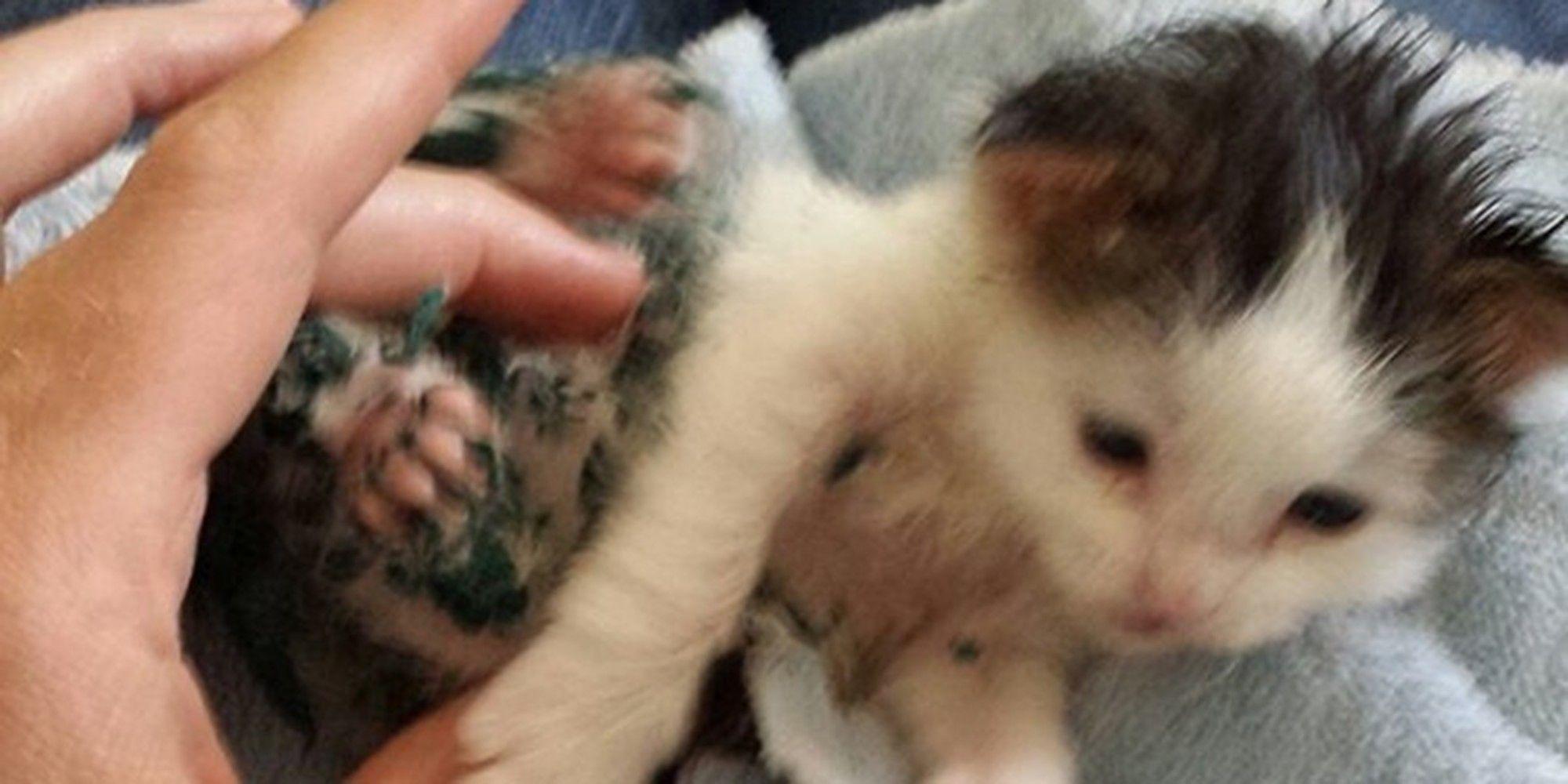 They Try To Find The Hero Who Saved Paint Covered Kitten In Dumpster Kitten Photos Kitten Tiny Kitten