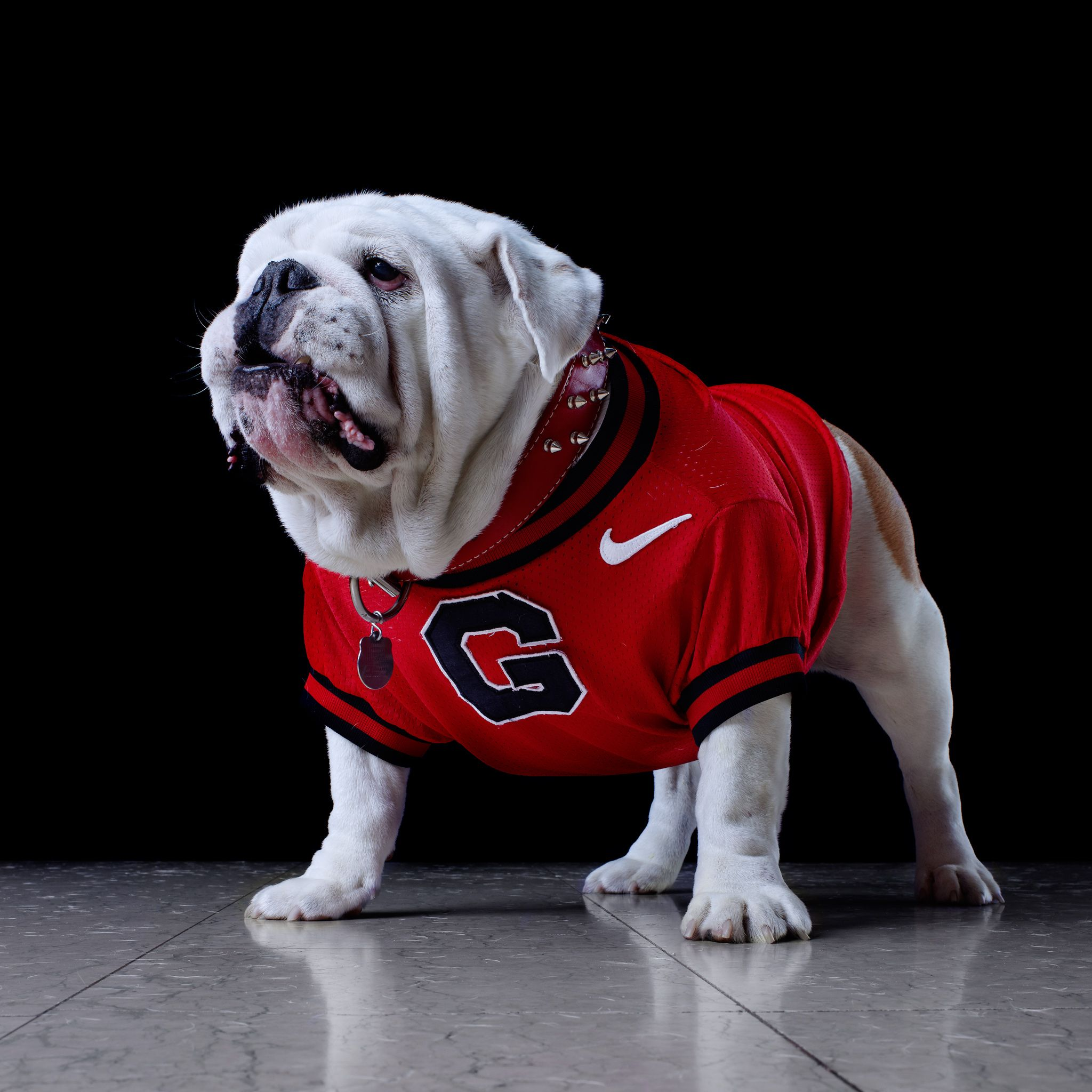 georgia bulldog puppies mascots of the southeastern conference dogs georgia 8397