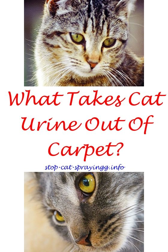 How To Get Rid Of Cat Spray Animals Cat Pee Smell